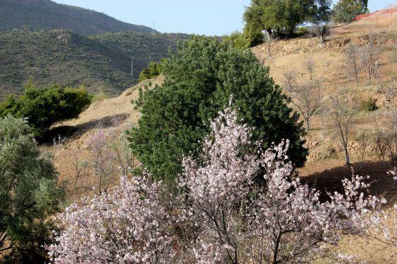Riad de l'olivier 02